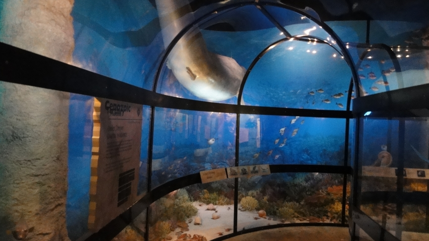 Restaurants Near Museum Of Natural Science Raleigh Nc