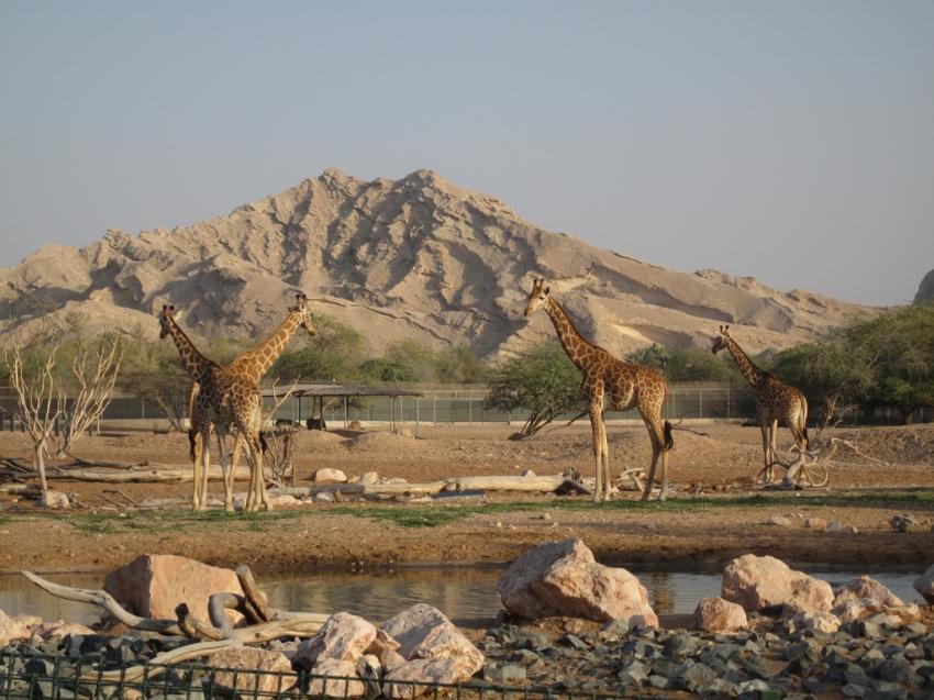 Hotels Near Al Ain Zoo